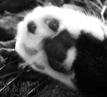 """The foot of a friend""  by KeeperOfKeys"