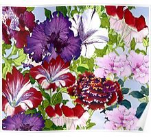 Petunia Glory Poster