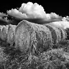 Daylesford Hay by Victor Pugatschew