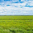 Glenholme Panorama, McKinlay, Qld by Carmel Williams