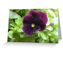 Purple Annual Greeting Card