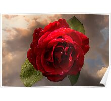 Rose after Rain Poster