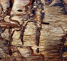 Road to the Lost Termite City by Scott  Cook