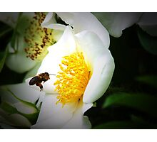 Flower 13 Photographic Print