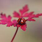 Ladybird in autumn by Ellen van Deelen