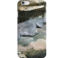 Pretty Dwarf Crocodile