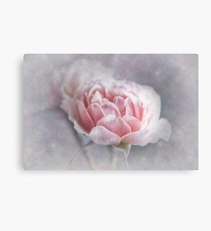 Softly Softly Canvas Print