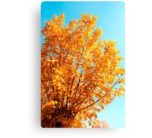 Perfect Fall Canvas Print