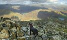 The Dog,The Photographer and The Mountain by VoluntaryRanger