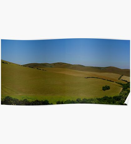 cornfield with trees Poster