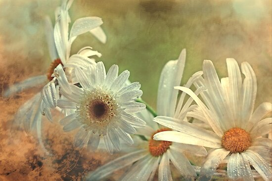 """""""Simply Daisies...."""" by Rosehaven"""