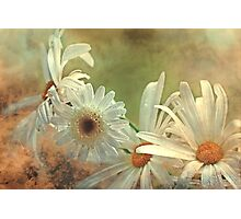 """Simply Daisies...."" Photographic Print"