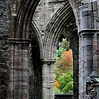 Autumn View - Tintern Abbey by Samantha Higgs