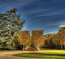 Sceaux park by jean-jean
