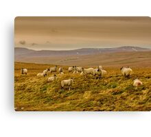 Winter on the Moors Canvas Print