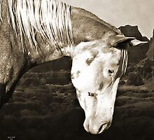 Paint Horse in the Badlands by Ginny Luttrell