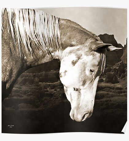 Paint Horse in the Badlands Poster