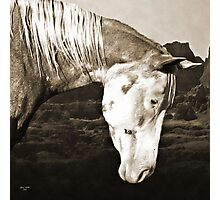 Paint Horse in the Badlands Photographic Print