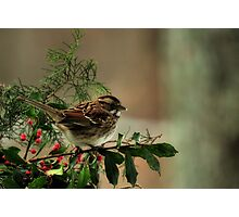 Good Cheer for the Holidays Photographic Print