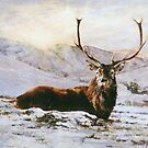 Stag in Snow by David McEwen