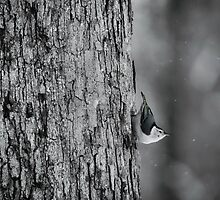 Let it Snow! by LynnRoebuck