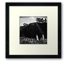 Pampas Grass, Glen Canyon Park, San Francisco Framed Print
