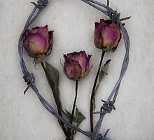 three roses and barbed wire by Maria Heyens