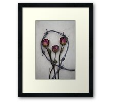 three roses and barbed wire Framed Print