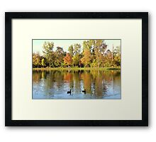 Fall Colors Reflecting In Pond With Ducks Framed Print