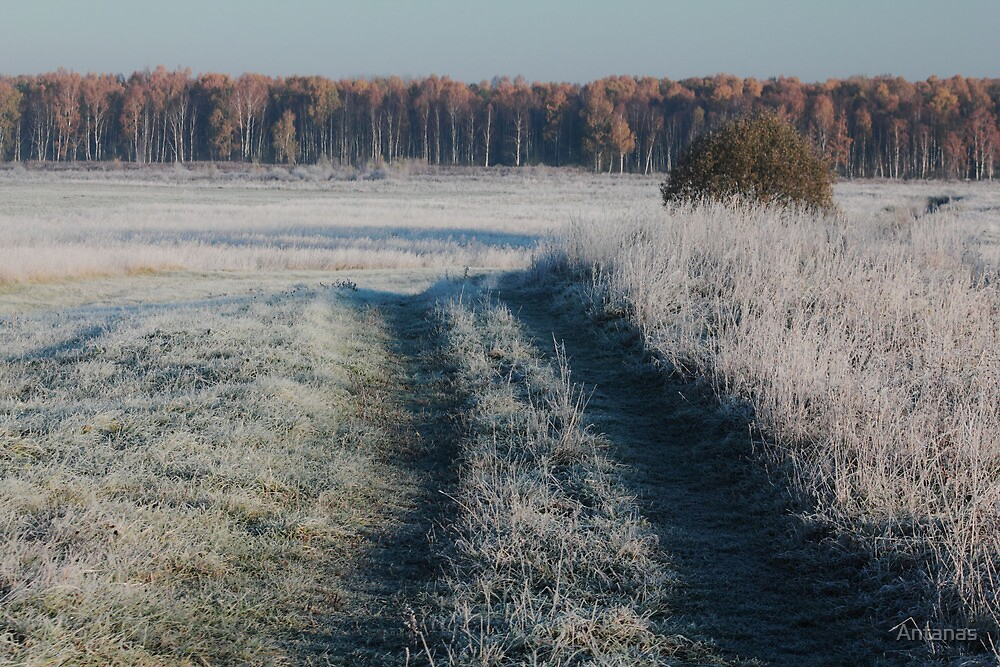 First frost and wild pathway in grassland by Antanas