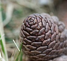Pine Cone by Wealie