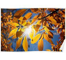 Sun Drop Poster