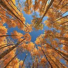 Glowing Forest by Wojciech Dabrowski