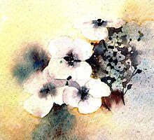 White Hydrangea by Val Spayne
