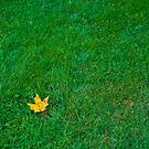 YELLOW LEAF by RGHunt
