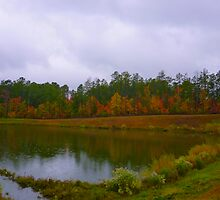 Fall Pond Color by Jonathan Green by Jonathan  Green