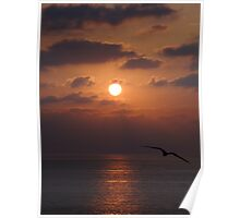 Peaceful - Pacific Ocean with sun and bird in an unique evening mood Poster