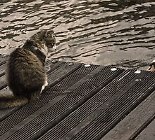 The cat and the swans by Esther  Moliné