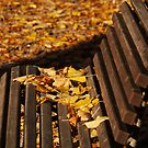 Bench Leaves by Rae Tucker