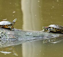 Hello Turtle! by Jacqueline van Zetten