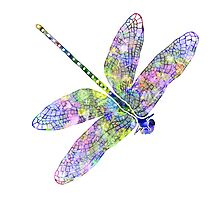 Dragonfly by mrthink