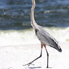 Great Blue Heron  by eangelina64