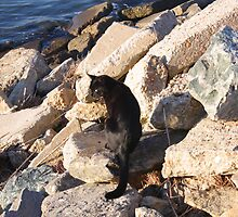 Feral Cat by the Water by thinkhmm