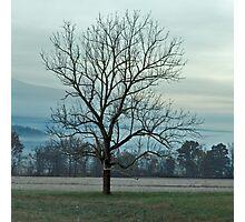 The Loner Photographic Print