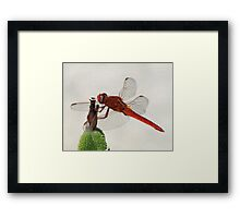 Hold on!!! Framed Print