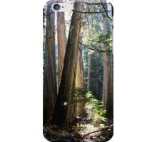 Old Growth Cedar iPhone Case/Skin