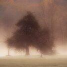 November by Mary Ann Reilly
