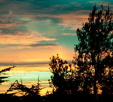 Pine Silhouette On Sunset Clouds by Marc Garrido Clotet