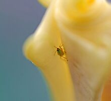 Micro Bug by Leon Heyns