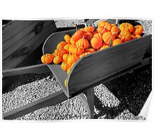 Orange Pumpkin Harvest Poster